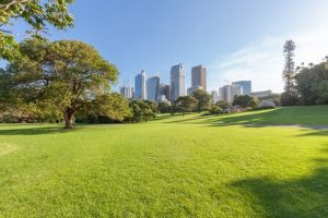 Why do we want green spaces in our cities